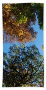 All The Trees Of The Forest Beach Towel