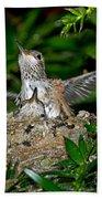 Allens Hummingbird Chicks Beach Towel