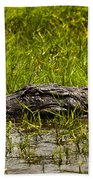 Alligator Amoungst Us Beach Towel