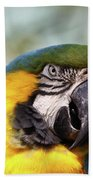 Alligator Farm Resident Beach Towel