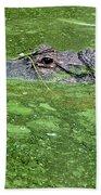 Alligator In Swamp Beach Towel