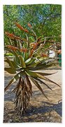 Aloe Plant In Kruger National Park-south Africa Beach Towel
