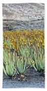 Aloevera Plantation Lanzarote Beach Towel