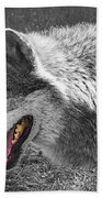 Alpha Male Wolf - You Look Tasty 2 Beach Towel
