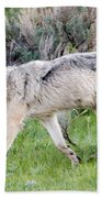 Alpha Wolf On The Move Beach Towel