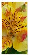 Alstroemerias Flower 1 Beach Towel