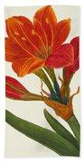 Amaryllis Purpurea Beach Towel