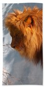 Amazing Male Lion Beach Towel