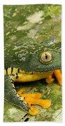 Amazon Leaf Frog Beach Towel