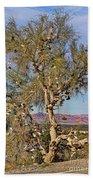 Amboy Shoe Tree By Diana Sainz Beach Towel