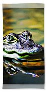 American Alligator 2 Beach Towel