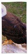 American Bald Eagle 1 Beach Towel