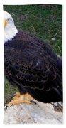 American Bald Eagle 2 Beach Towel