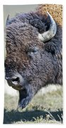American Bison Closeup Beach Towel