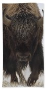 American Bison Portrait Beach Towel by Tim Fitzharris
