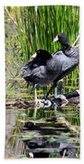 American Coot 1 Beach Towel