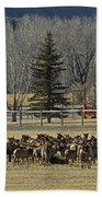 American Elk   #4305 Beach Towel