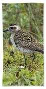 American Golden Plover Beach Towel