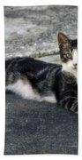 American Grey Tiger Stripe Kitten Portrait Beach Towel
