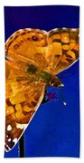 American Lady Butterfly Blue Square Beach Towel