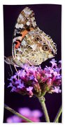 American Painted Lady Butterfly Purple Background Beach Towel