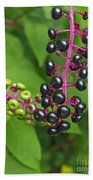 American Pokeweed  Beach Towel