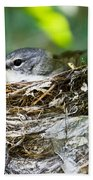 American Redstart Nest Beach Towel