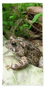 American Toad Beach Towel
