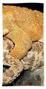 American Toads  Beach Towel