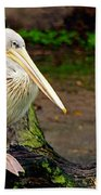 American White Pelican Beach Towel