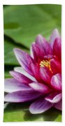 Among The Lily Pads Beach Towel