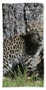 Amur Leopard Cub Antics Beach Towel