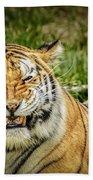 Amur Tiger Smile Beach Sheet