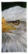 An Eagle's Portrait Beach Towel