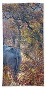 An Elephant Making Its Way Beach Towel