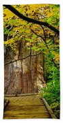 An Old Growth Douglass Fur In The Grove Of The Patriarches Mt Rainer National Park Beach Towel