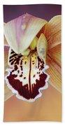 An Orchid Beach Sheet