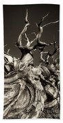 Ancient Bristlecone Pine In Black And White Beach Towel