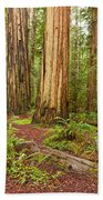Ancient Forest - The Massive Giant Redwoods Sequoia Sempervirens In Redwood National Park. Beach Towel
