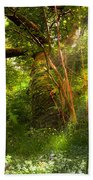 Ancient Tree Beach Towel