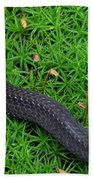 Anerythristic Red Belly Snake Beach Towel