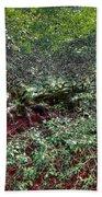 Angel Oak Tree 3 Beach Towel