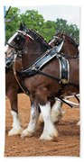 Anheuser Busch Budweiser Clydesdale Horses In Harness Usa Rodeo Beach Towel