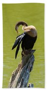 Anhinga Grooming Feathers Beach Towel