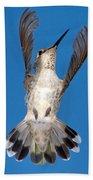 Anna's Hummingbird Tail Display Beach Towel
