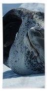 Antarctic Leopard Seal On Iceberg Beach Towel