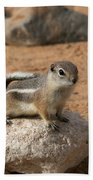 Antelope Ground Squirrel Beach Towel