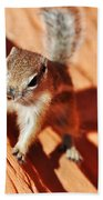 Antelope Ground Squirrel Beach Towel
