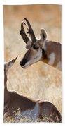 Antelope Love Beach Towel