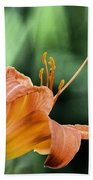 Anthers Aglow Beach Towel